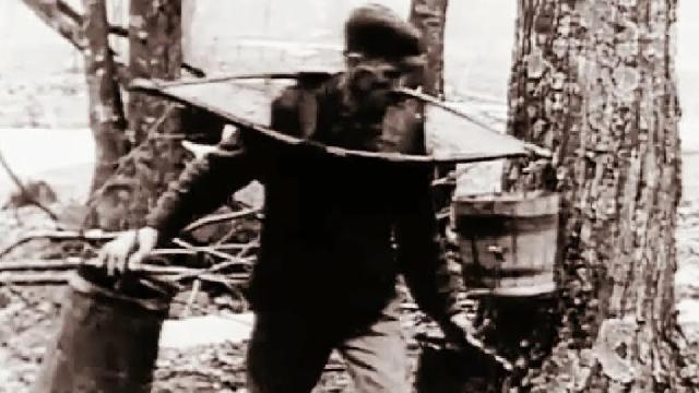 Le temps des Sucres en 1925