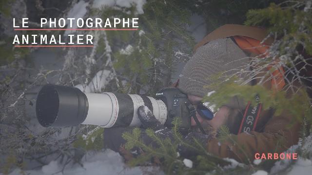 Photographier l'intimité de la vie sauvage